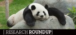 Energized Leaders Avoid Panda-Monium