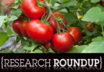 Tomatoes RR sm